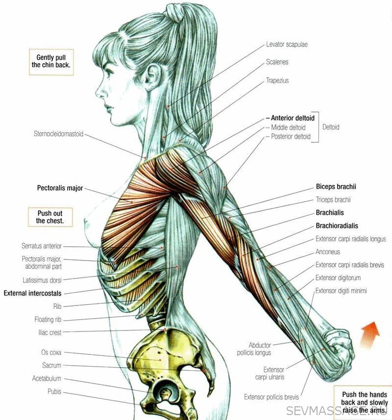 Середина грудинной кости