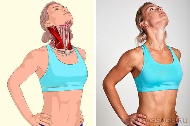 Растяжка мышц, сгибающих шею