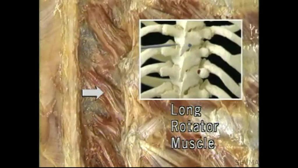 Длинные ротаторы